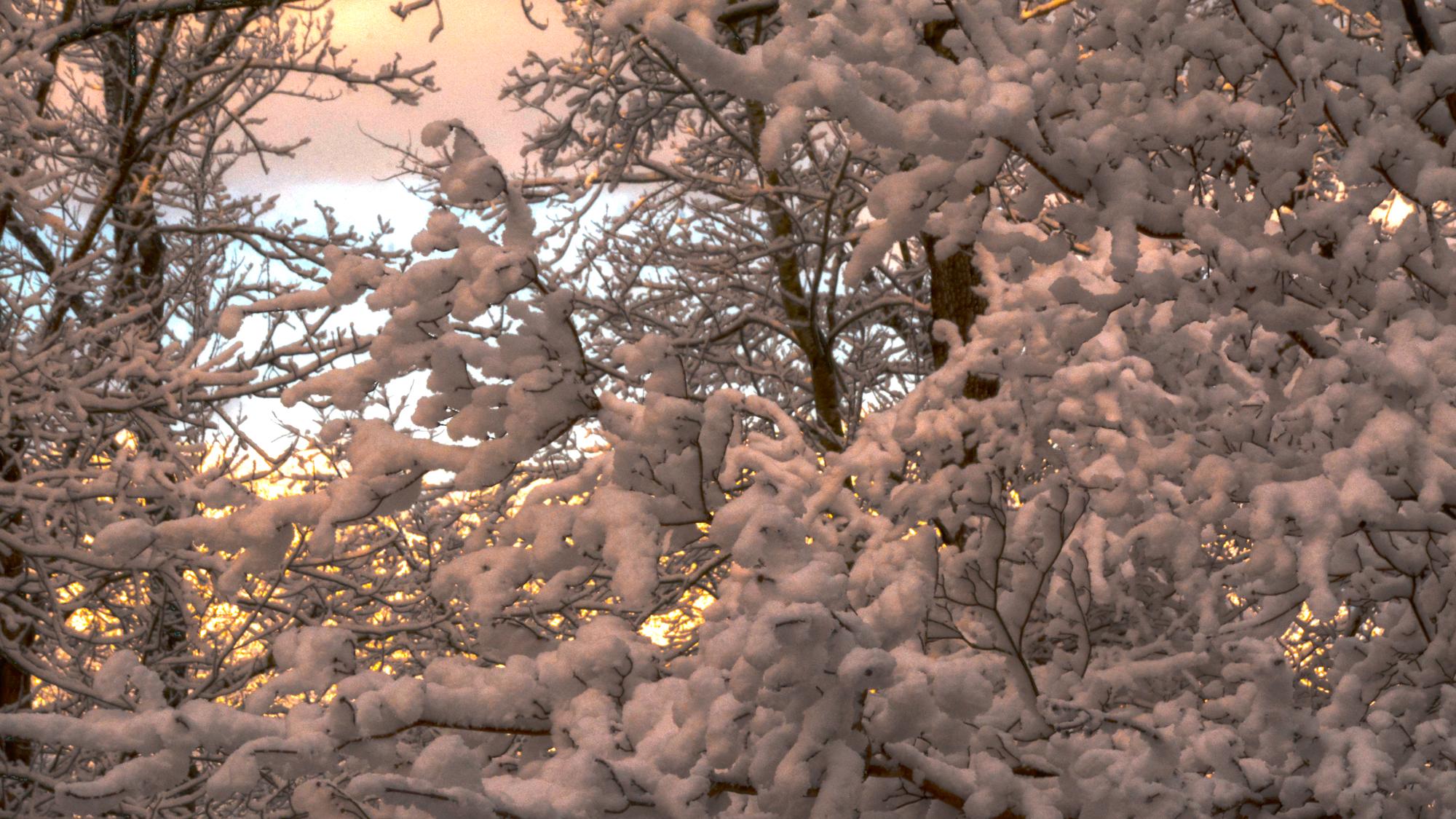 2021 January Snowstorm